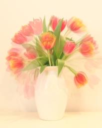 flower-tulips-fill